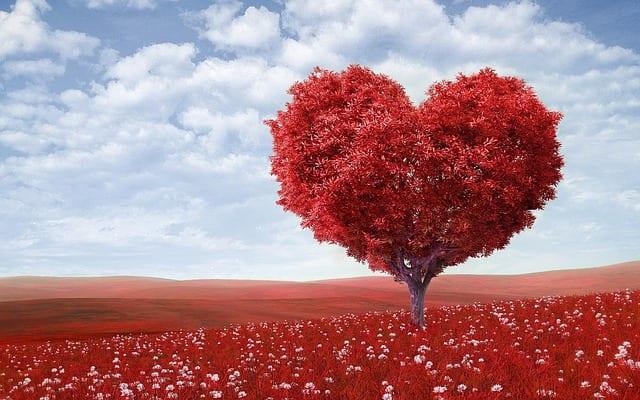How to Love After Heartbreak